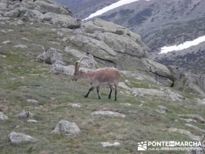 Ruta Cuerda Larga - Bailanderos; findes; nieve madrid; bastones trekking